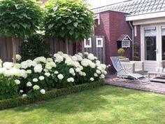 hortensia border - hier met trompetboompje. Kan ook met siergrassen ervoor en hogere pluimhortensias erachter: