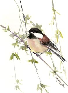 chickadee artwork, bird art, bird painting, original watercolor, watercolor birds, bird wall art, chickadees, nursery, children, bird gift by ORIGINALONLY on Etsy