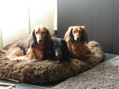 they love their furry bed