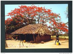 GAMBIA  -  Traditional Huts/