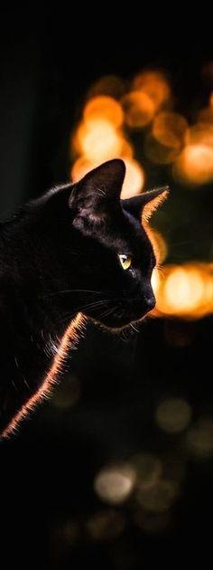 Black cat and bokeh