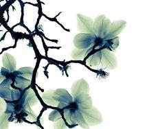 a spring breeze por Goda Lau en Etsy