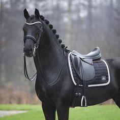 Mail - Ellen Sensel - Outlook Cute Horses, Pretty Horses, Horse Love, Dressage Horses, Friesian Horse, Arabian Horses, Black Horses, Wild Horses, Horse Photos