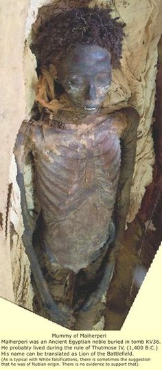 Moringa Ancient Miracle Tree, found in Egyptian Tombs! African History, African Origins, Egypt Mummy, Egyptian Mummies, Egyptian Art, Kemet Egypt, Art Ancien, Ancient Civilizations, Ancient Artefacts