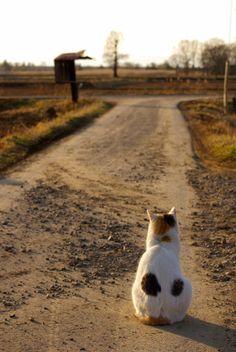 mariusu: 猫の想い
