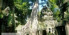 Ta Prohm, one of the coolest temples in the ancient city of Angkor.