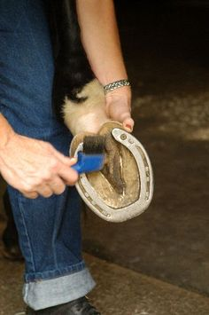 How to help your horse have healthy hooves. Remember to pick out their feet every day. Horse Information, Horse Care Tips, Horse Facts, Horse Treats, Funny Horses, Horse Grooming, All About Horses, Horse Training, Horse Pictures