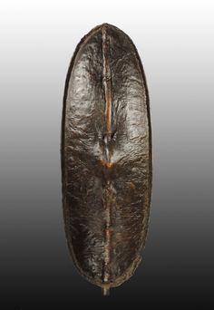 Shilluk - 102 x 36 cm gr.jpg - African shields - African Weapons