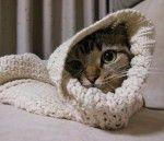 猫好き必見!「そでねこ」
