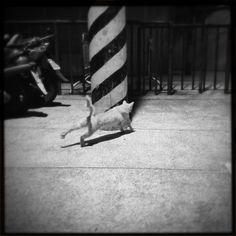 我能明白貓本身自由的天性,但…我不能明白桎梏自己的那些不自由…