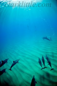 Wild dolphins... In the oceans where they should be!
