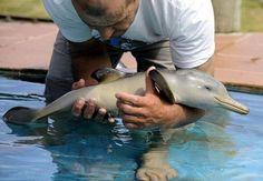 awww baby dolphin, my favorite animal! <3