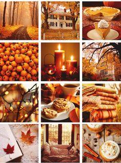 #orange #glow #fall
