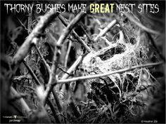 It's October, and what's scarier than a horror movie marathon? Not having any thorny shrubs in your yard!  Before you go all Edward Scissorhands on those thorny hedgerows, think of The Birds. Yes, birds like to nest in thorny shrubs because they deter predators, and that's no Urban Legend.   Plant shrubs with thorns; birds will nest in them, and about 28 Days Later, those nests will be full of Warm Bodies.  Slither on over to YardMap to learn more about shrubs!