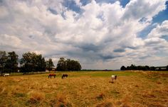 """Ob wir heute trocken bleiben?  ... fragten mich die Pferde auf der Koppel beim Heidwaldhof, nahe Merzig-Silwingen. - Ja, wenn ihr rechtzeitig im Stall seid, antwortete ich.   <a href=""""http://www.heidwaldhof.de/home2.html"""">http://www.heidwaldhof.de/home2.html </a>"""