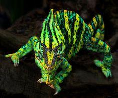 #Yemen #Chameleon. #lizard #reptile Smile by Klaus Wiese on Fivehundredpx