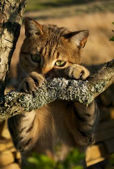 Bad hunting when its the only limb you can find.