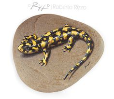 Unique Hand Painted Tiger Salamander Resting On A Rock | Fine Art by Roberto Rizzo