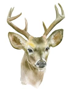 Eight-Point Buck watercolor giclée reproduction. Portrait/vertical orientation. Printed on fine art paper using archival pigment inks. This quality printing allows over 100 years of vivid color in a t