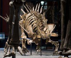 Kentrosaurus in our dinosaur hall (Natural History Museum Berlin)    © Museum für Naturkunde