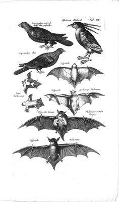 Dr. J. Jonstons Beschrijving van de natuur der ...