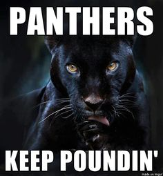 Carolina panther licking his chops~ He's ready, he's hot, and not gonna drop!!