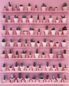 Tag a cactus lover! Pink Cactus Wall designed by Sugaring London. – All Pictures Pink Love, Pretty In Pink, Pink And Green, Pink Wallpaper, Colorful Wallpaper, Wallpaper Plants, Trendy Wallpaper, Photo Wall Collage, Picture Wall