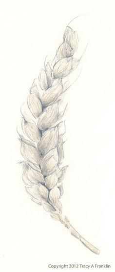 Tracy A Franklin - specialist embroiderer: Wheat