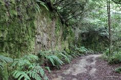 The Road More Travelled by islandmommacanarias, via Flickr