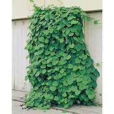 Pergola Ideas For Deck Code: 3844598520 Diy Pergola, Pergola Decorations, Deck With Pergola, Patio Roof, Pergola Ideas, Growing Gardens, Organic Gardening Tips, Pergola Designs, Green Plants