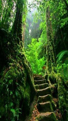 Jungle rainforest prom 2018