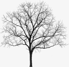 New Tree Photoshop Architecture Black Ideas Tree Psd, Tree Photoshop, Black And White Tree, Tree Sketches, Architecture Graphics, Tree Silhouette, Trendy Tree, Winter Trees, Trees To Plant
