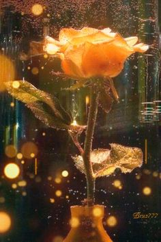 RUMA♥ ♠ Золотая роза