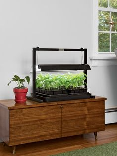 This small tabletop LED grow light guarantees exceptional plant health, whether you're growing seedlings, herbs, microgreens or other indoor plants. Growing Seedlings, Growing Plants, Growing Microgreens, Indoor Flowering Plants, Indoor Flowers, Flower Pot Design, Diy Pond, Aquaponics Fish, Backyard Aquaponics