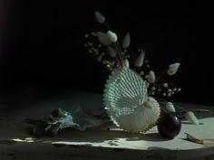 Fiona Pardington — Still Life with Paper Nautilus and Plum.