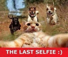 The last selfie. A cat takes his last selfie while getting caught by dogs. This is so funny.