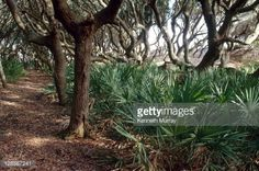 View top-quality stock photos of Cumberland Island Georgia. Find premium, high-resolution stock photography at Getty Images. Cumberland Island Georgia, Stock Photos, Photography, Image, Photograph, Fotografie, Photo Shoot, Fotografia, Photoshoot
