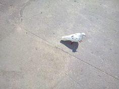 Bird in polka