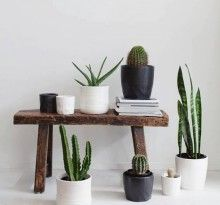 Cacti Cacti...oh how I love you Remodelista: Sourcebook for Considered Living