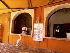 Senegal, strange customer in a Fast Food  Picture by Chiara B.