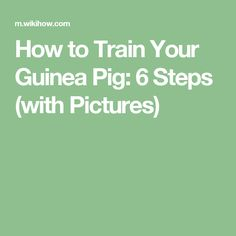 How to Train Your Guinea Pig: 6 Steps (with Pictures)
