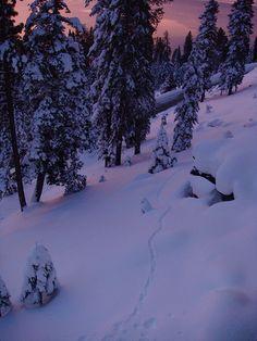 Animal tracks in snow in Lake Tahoe / http://www.sleeptahoe.com/animal-tracks-in-snow-in-lake-tahoe-2/