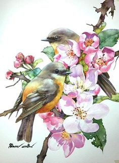 Birds and flowers watercolours watercolorart watercolour watercolor watercolorpainting watercolors draw draws draw drawing drawart drawings paint paints painted painter paint paints painter aquaman aquarium aqiqah Cute Animal Drawings, Bird Drawings, Cute Drawings, Watercolor Bird, Watercolor Paintings, Illustration Art Nouveau, Pintura Country, Bird Pictures, Animal Paintings