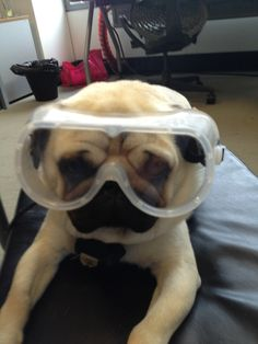 Mr. Pug says: I'm ready, let's blow stuff up