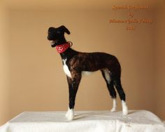Felted Spanish Greyhound dog dog sculpture por MinzooNeedleFelting Wool Needle Felting, Needle Felted Animals, Nuno Felting, Felt Animals, Animals And Pets, New Crafts, Etsy Crafts, Felt Dogs, Dog Sculpture
