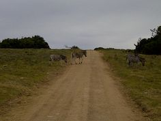 Lalibela - we stopped at the Zebra crossing ; Zebra Crossing, Zebras, Country Roads, Spaces, Pedestrian Crossing