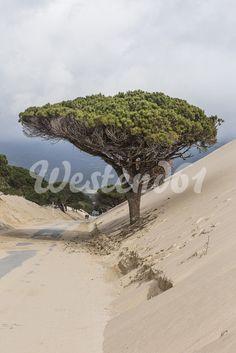Spain, Tarifa, sand dune