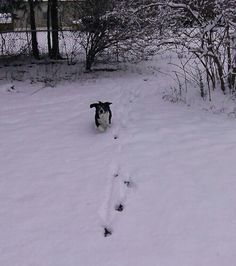 Lady Jane loving the snow