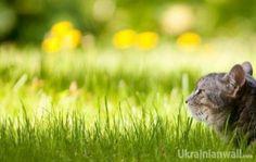 Більшість тижня буде переважно сухою, але похолодає — синоптик http://ukrainianwall.com/blogosfera/bilshist-tizhnya-bude-perevazhno-suxoyu-ale-poxolodaye-sinoptik/  Новий літній тиждень прийде із похолоданням, але із сухішим повітрям. Сьогодні тепліше ще на півдні, зливи ймовірні на півдні та сході України. Завтра - прямо холодненько, бо вночі +4+10, а