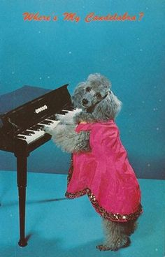 Vintage Dog Postcards - Poodles - Postcards Unused/Unposted | eBay